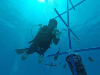 壁纸 动物 海底 海底世界 海洋馆 水族馆 鱼 鱼类 400_300